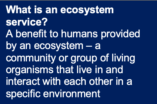 what-is-an-ecosystem-service