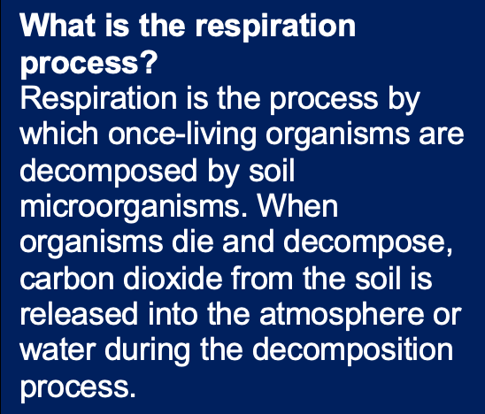 what-is-the-respiration-process